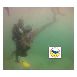 cemma pandomar colaboracion conservación fondos marinos